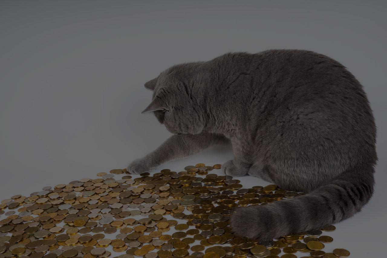 Surprise Kitten Kittens Cat Money Animals Pet